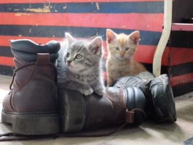 kitten boots