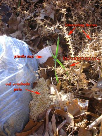 σκουπίδια και θαλασσόκρινοι