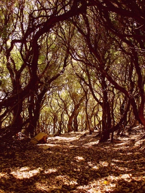 wiggly forest Ikaria