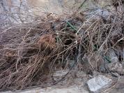 In ikariamag: 'Πρωτοβουλία Εθελοντών για τον καθαρισμό του φαραγγιού της Χάλαρης'