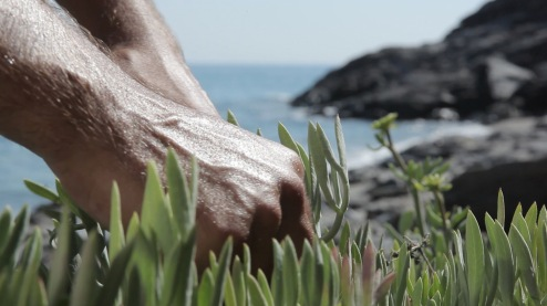 gathering samphire in ikaria 4